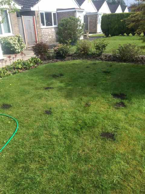 Repairing patchy Lawn