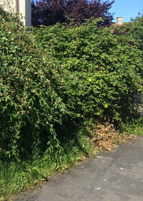 Bramble Clearance work during