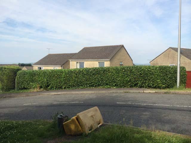Laurel Hedge Reduction After