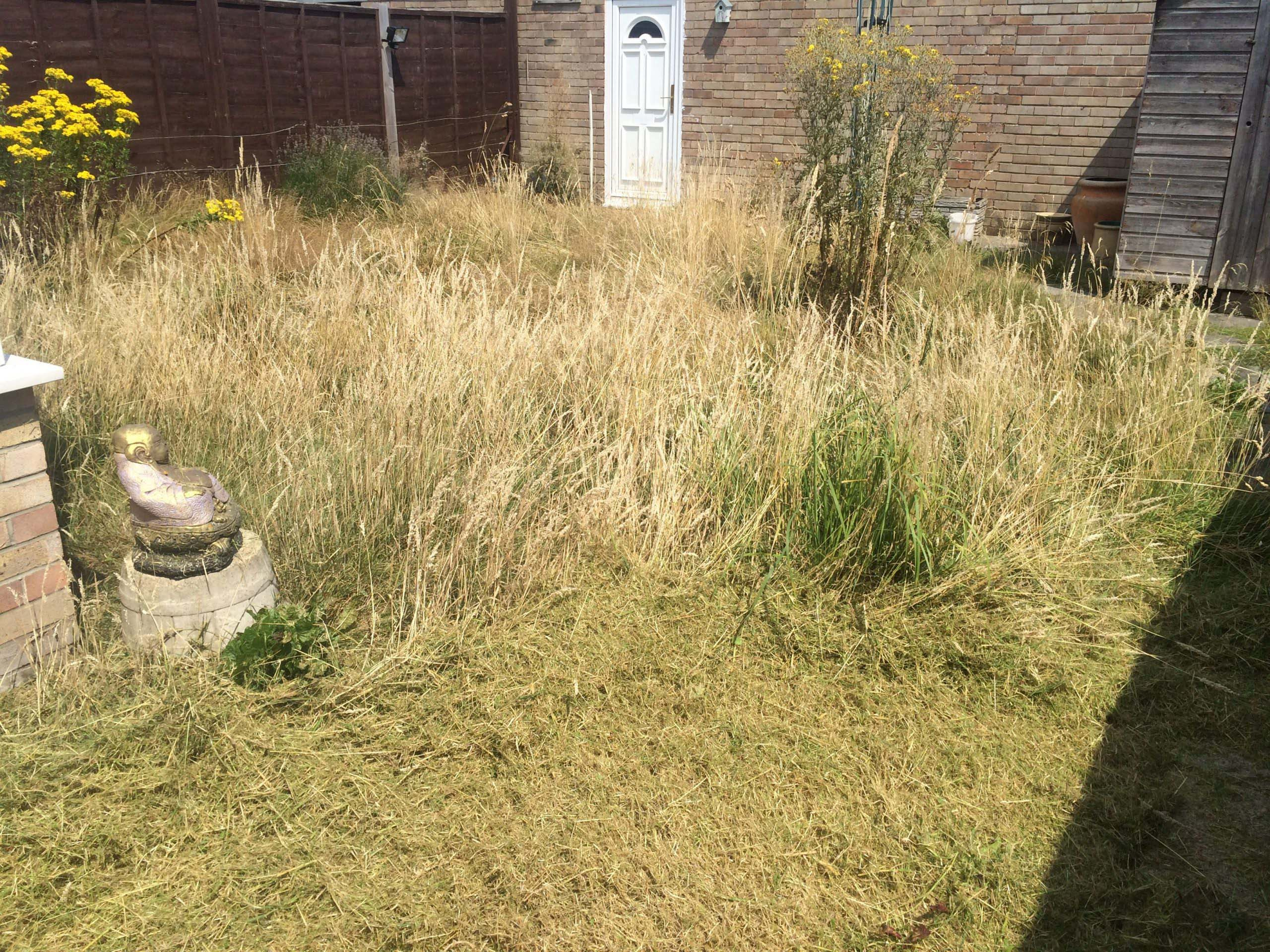 Grass cutting and Border work before