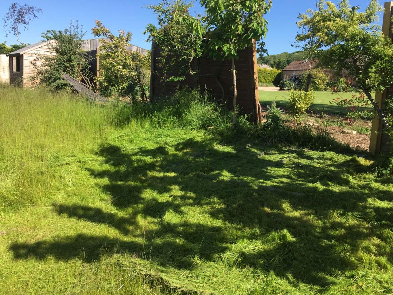 Overgrown grass cutting during
