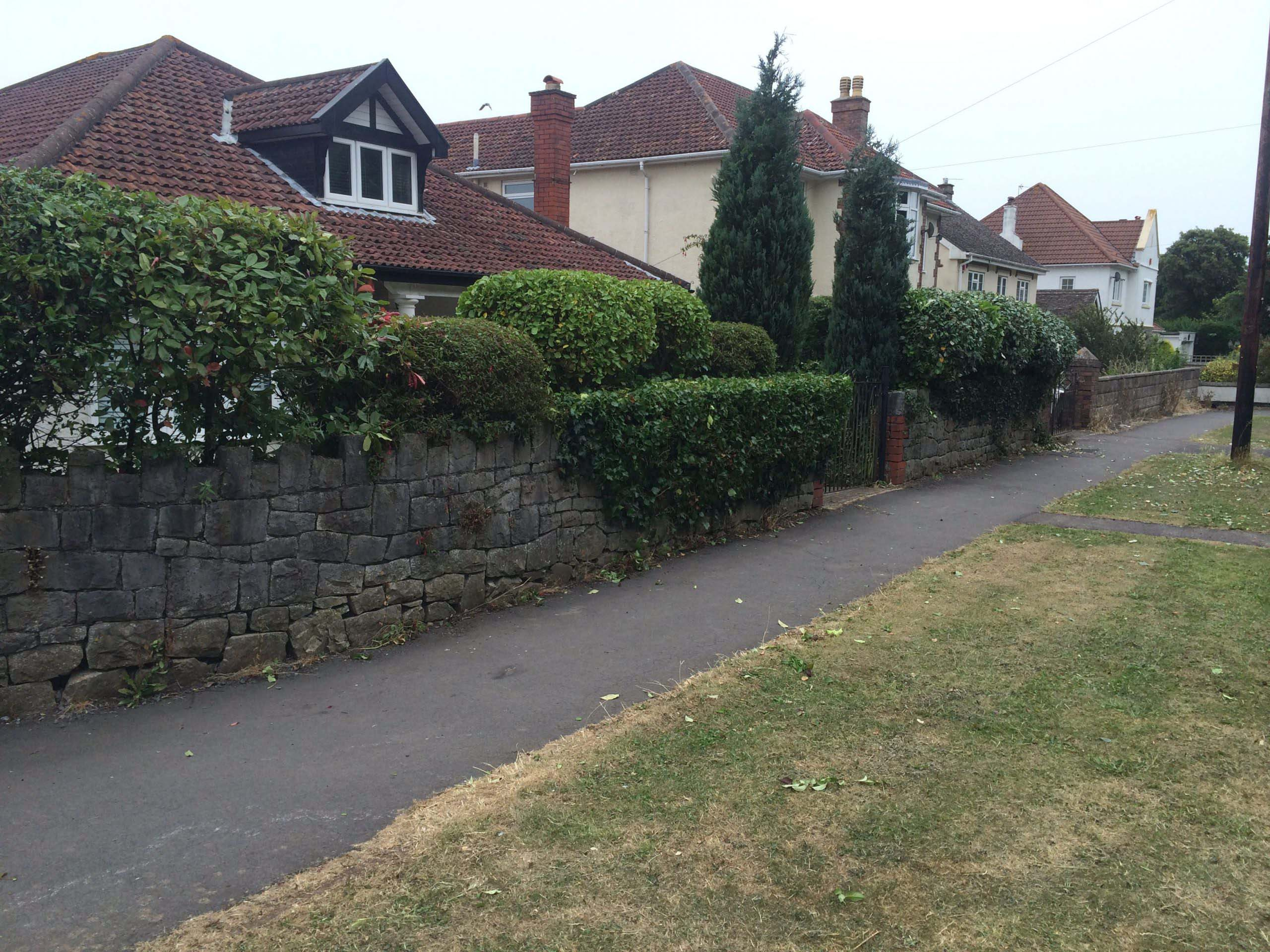 Hedge and Shrub Reduction after