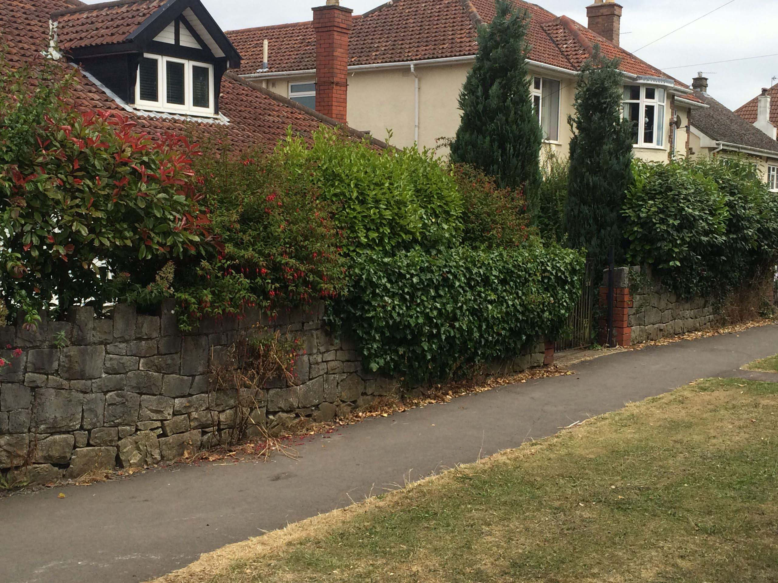 Hedge and Shrub Reduction before